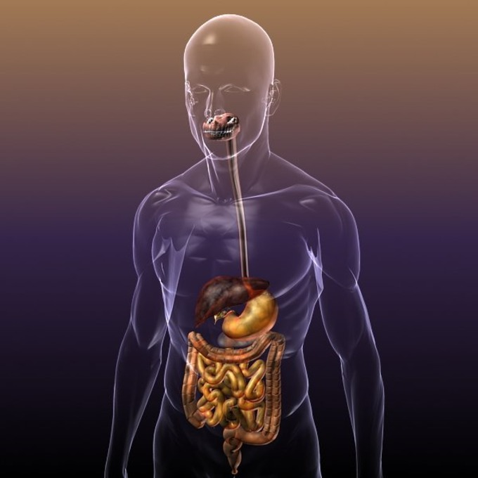 Digestive System In A Human Body 3d Animation