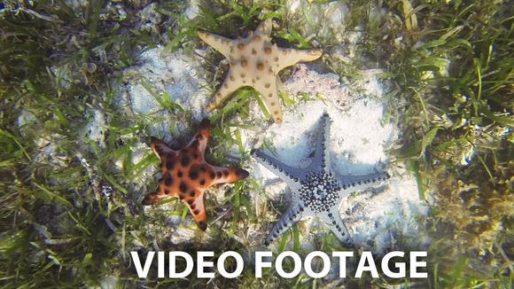 Starfish On The Sandy Bottom