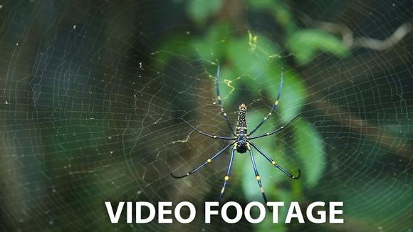 Big Spider On Web