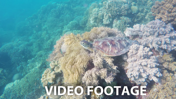 Sea Turtle In The Tropical Sea
