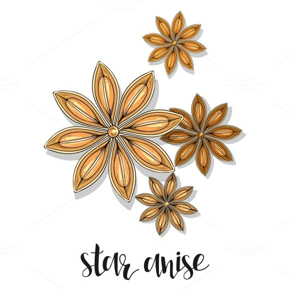 Star anise isolated in sketch. Spice - Objects