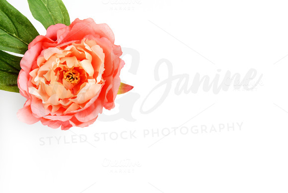 Styled Stock Photography Flower