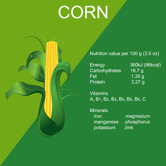 Ripe Corn Cob Vector