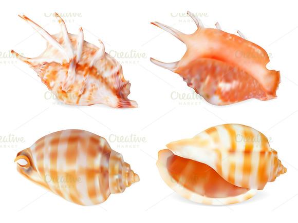 Set Of Seashell