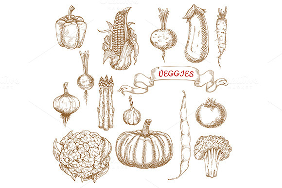 Farm Ripe Vegetables Sketches