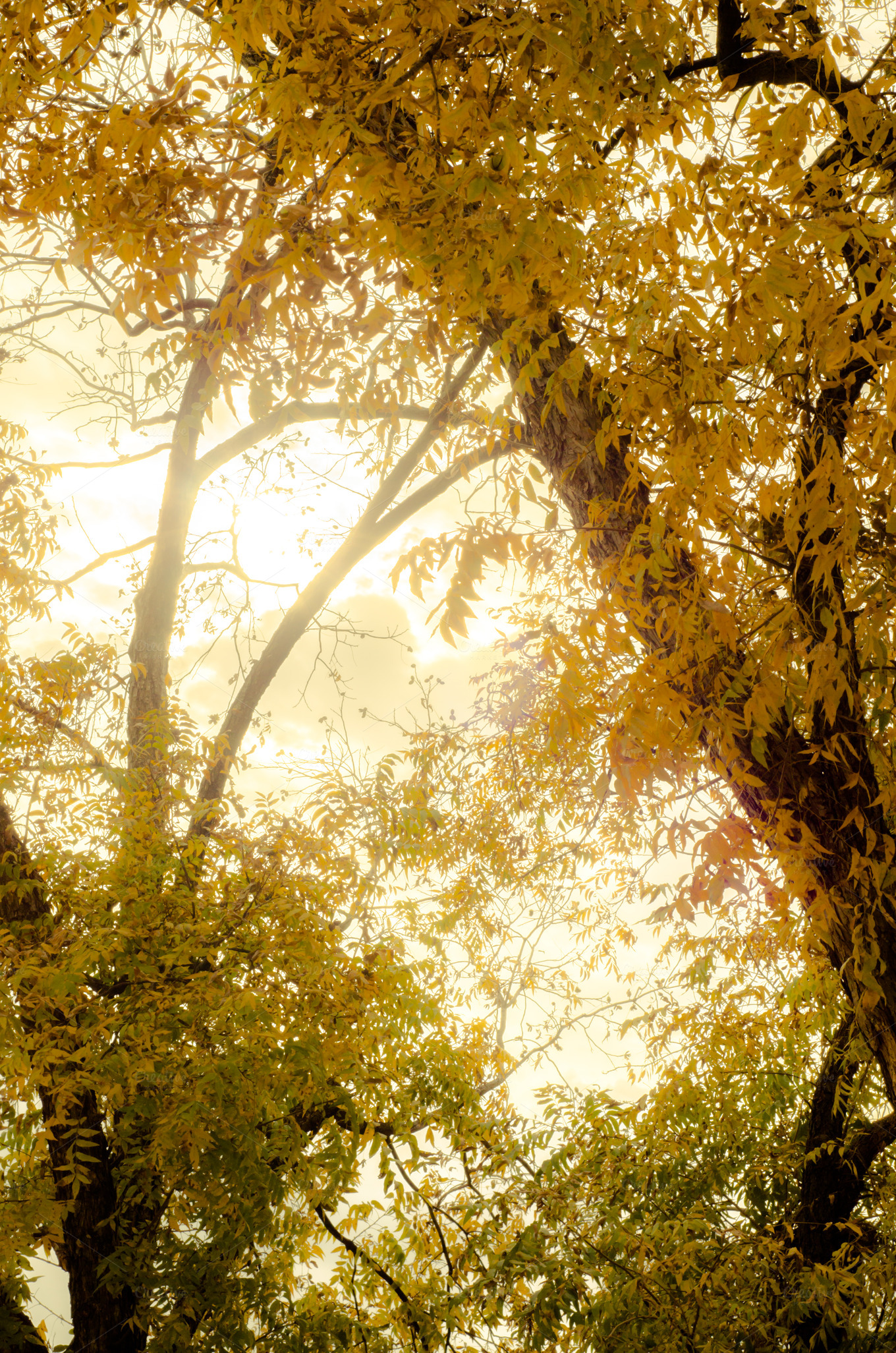 Sun Glowing Through Autumn Leaves Nature Photos On