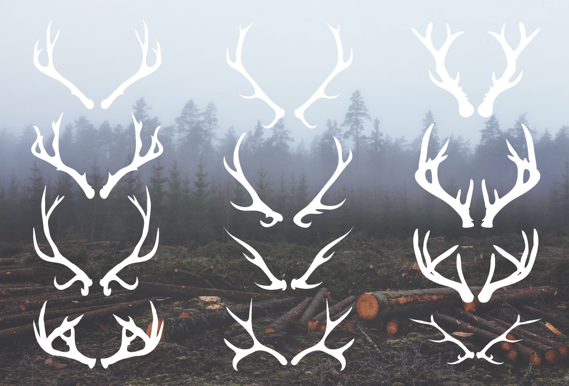 Deer Antlers - 12 Hand Drawn Vectors ~ Illustrations on ...