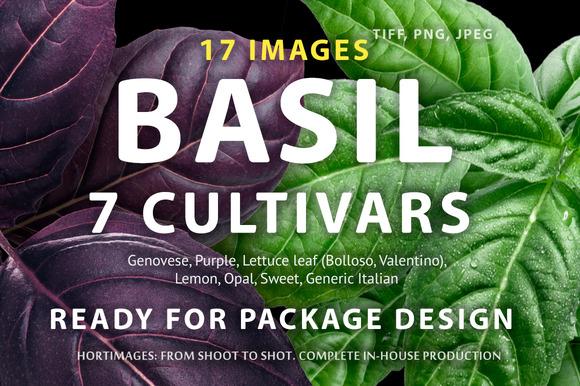 Basil 7 Cultivars
