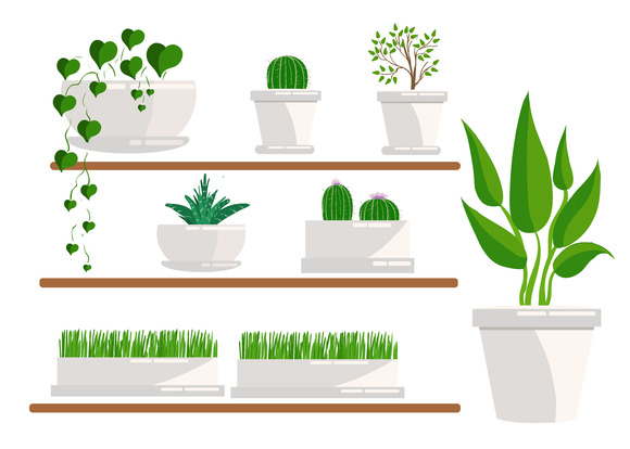 Set of houseplant. isolated on white - Illustrations