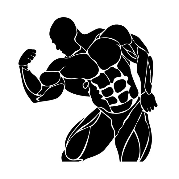 bodybuilding, powerlifting, vector ~ Illustrations on