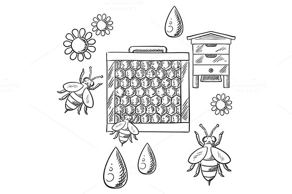 Beekeeping And Apiary