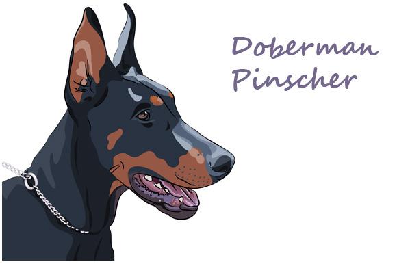 Dog Doberman Pinscher