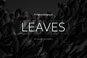 171 Dry Leaves Photography-Graphicriver中文最全的素材分享平台
