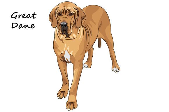 Dog Great Dane 1