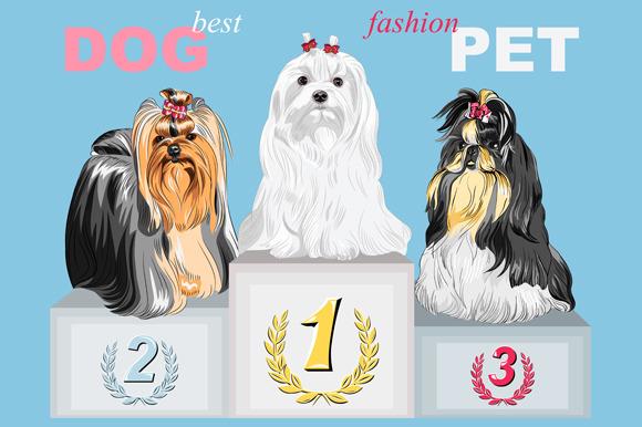 Fashion Dog Champion