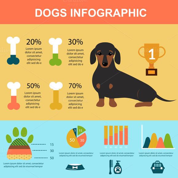 Dachshund Dog Infographic Vector