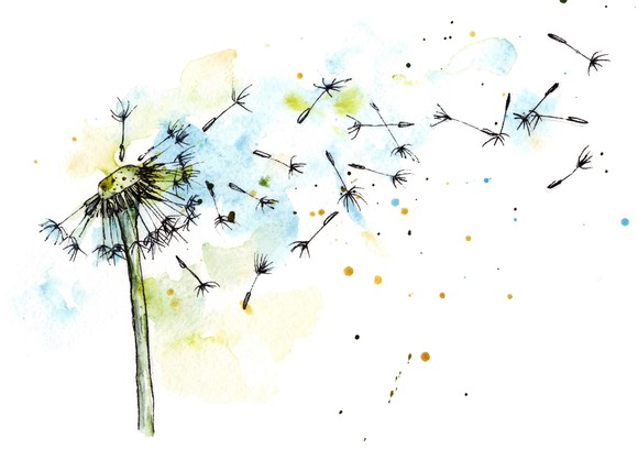 dandelion in watercolor and ink illustrations on