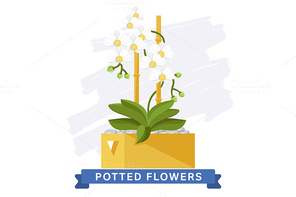 Poted Flowers. Spring series - Illustrations