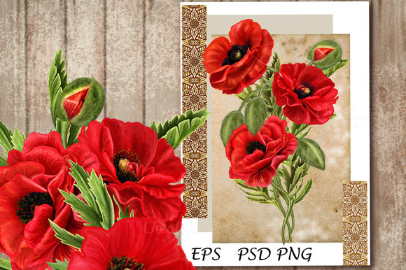 Set. Red poppies - Illustrations