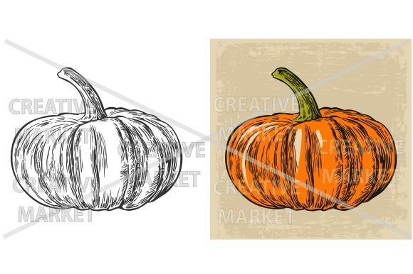 Pumpkin. Vector vintage engraving - Illustrations