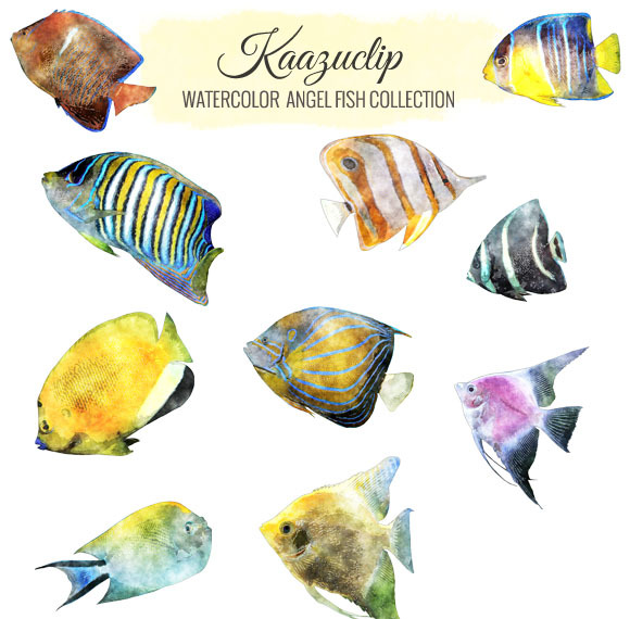 Watercolor Angel Fish