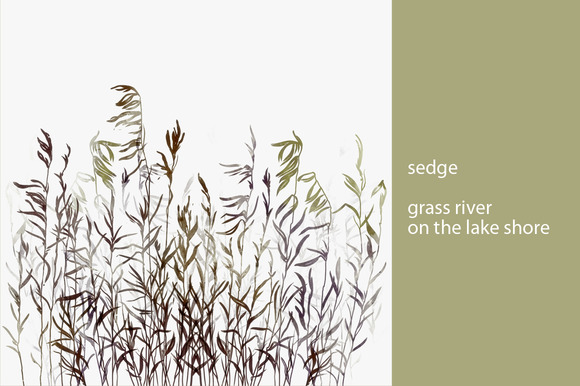 sedge. grass river on the lake shore - Illustrations