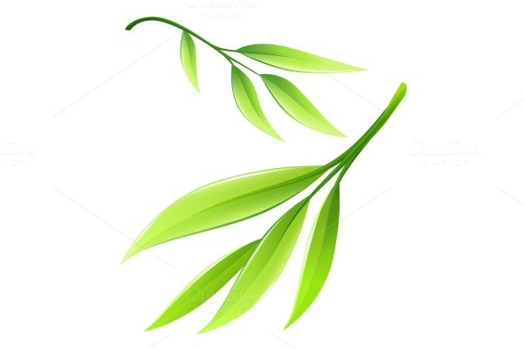 Branch with green bamboo leaves. Eps10 vector illustration isolated on white background - Illustrations