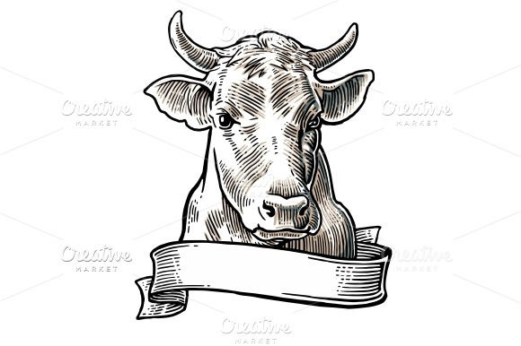 Cows head. Hand drawn engraving - Illustrations