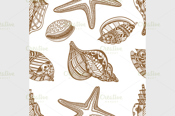 Sea shells. Brown and white - Graphics
