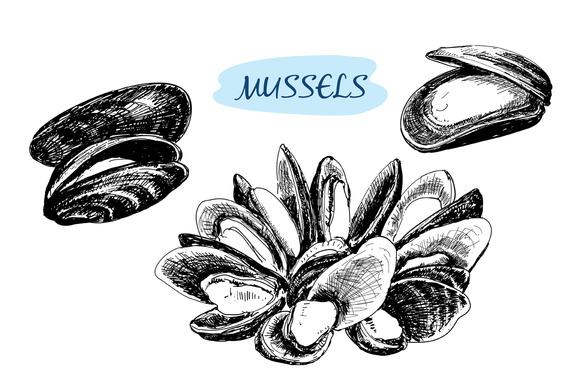 Mussels. Set of vector illustrations - Illustrations