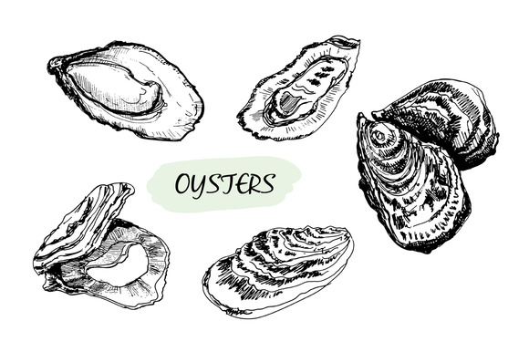 Oysters Set Of Vector