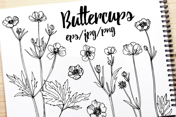 Wildflowers. Buttercups - Illustrations