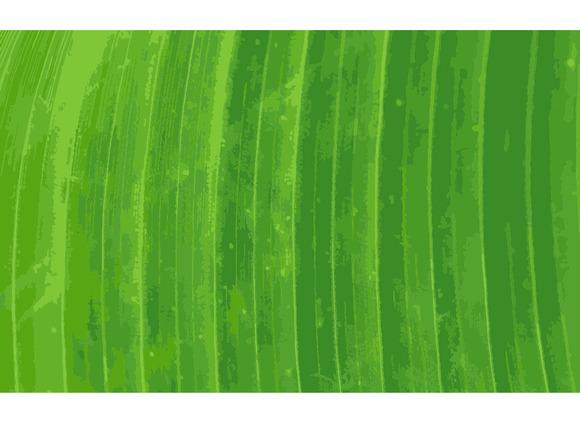 Pattern Of Green Banana Leaf Backgro