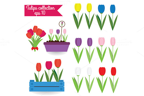 Tulips. Vector illustration - Graphics