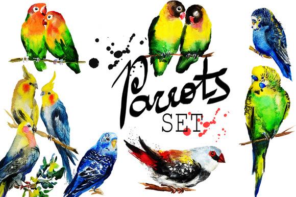 Set Of Watercolor Parrot