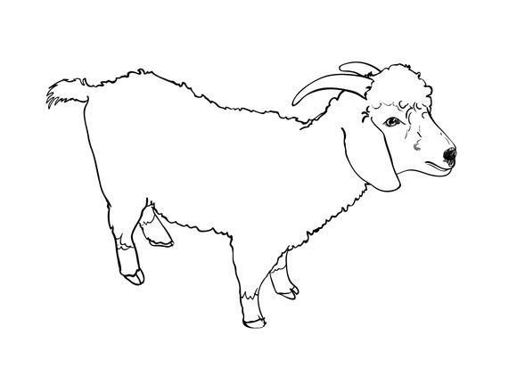 Line Drawing Goat : Angora goat vector illustrations on creative market
