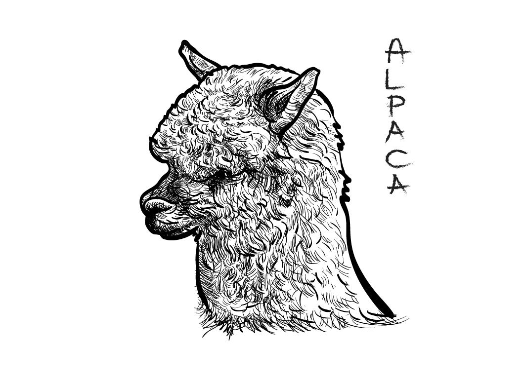 Alpaca ~ Illustrations on Creative Market