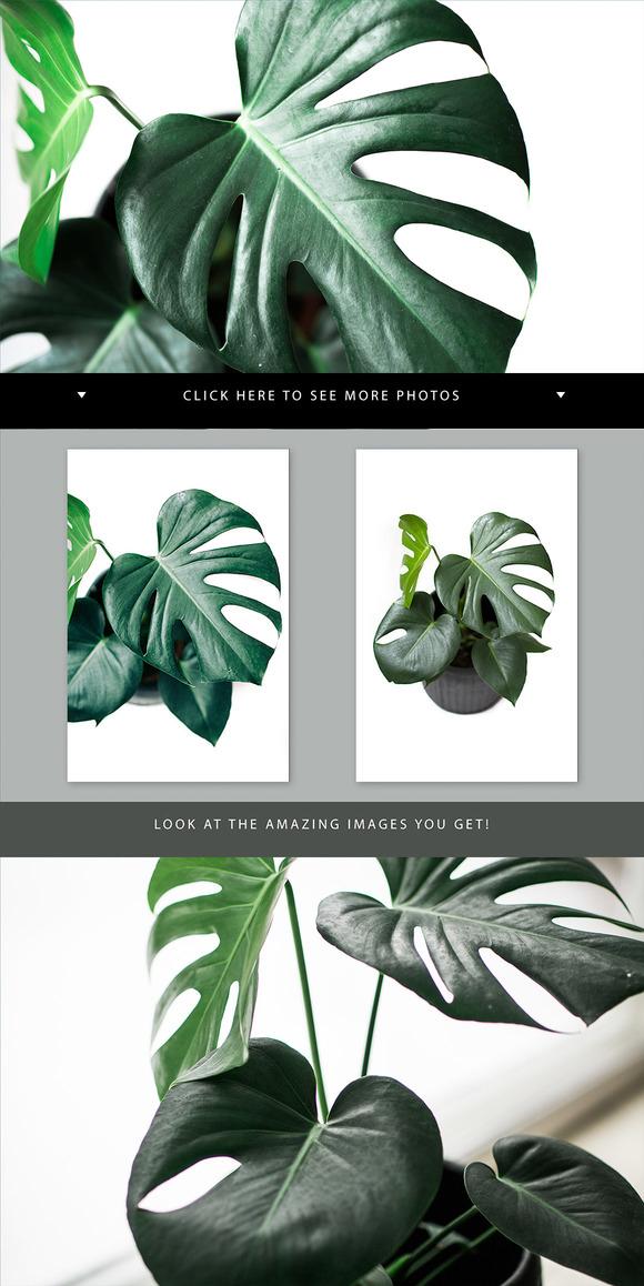 4 Green Plant Stock Photos