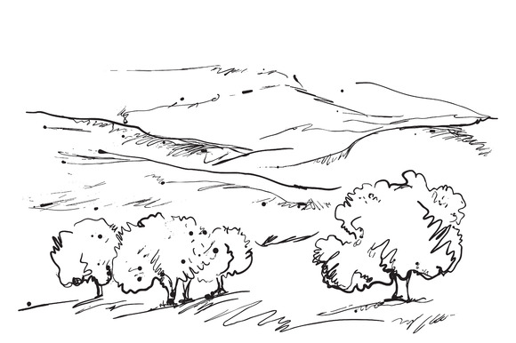 Hand Darwn Landscape