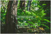 THE FOREST COLLECTION iseey-Graphicriver中文最全的素材分享平台