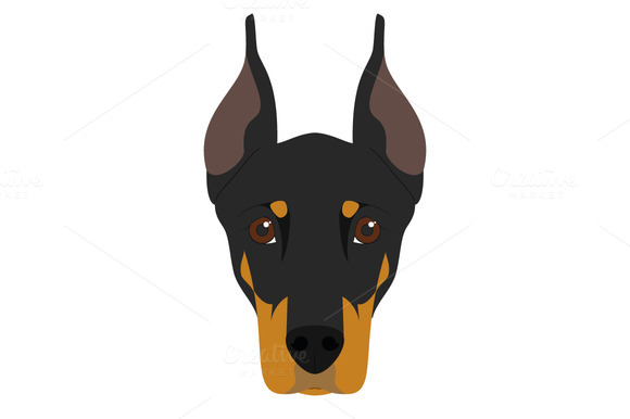 Doberman Dog Vector Illustration