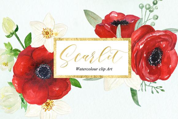 Anemones Scarlet Watercolour Clipart