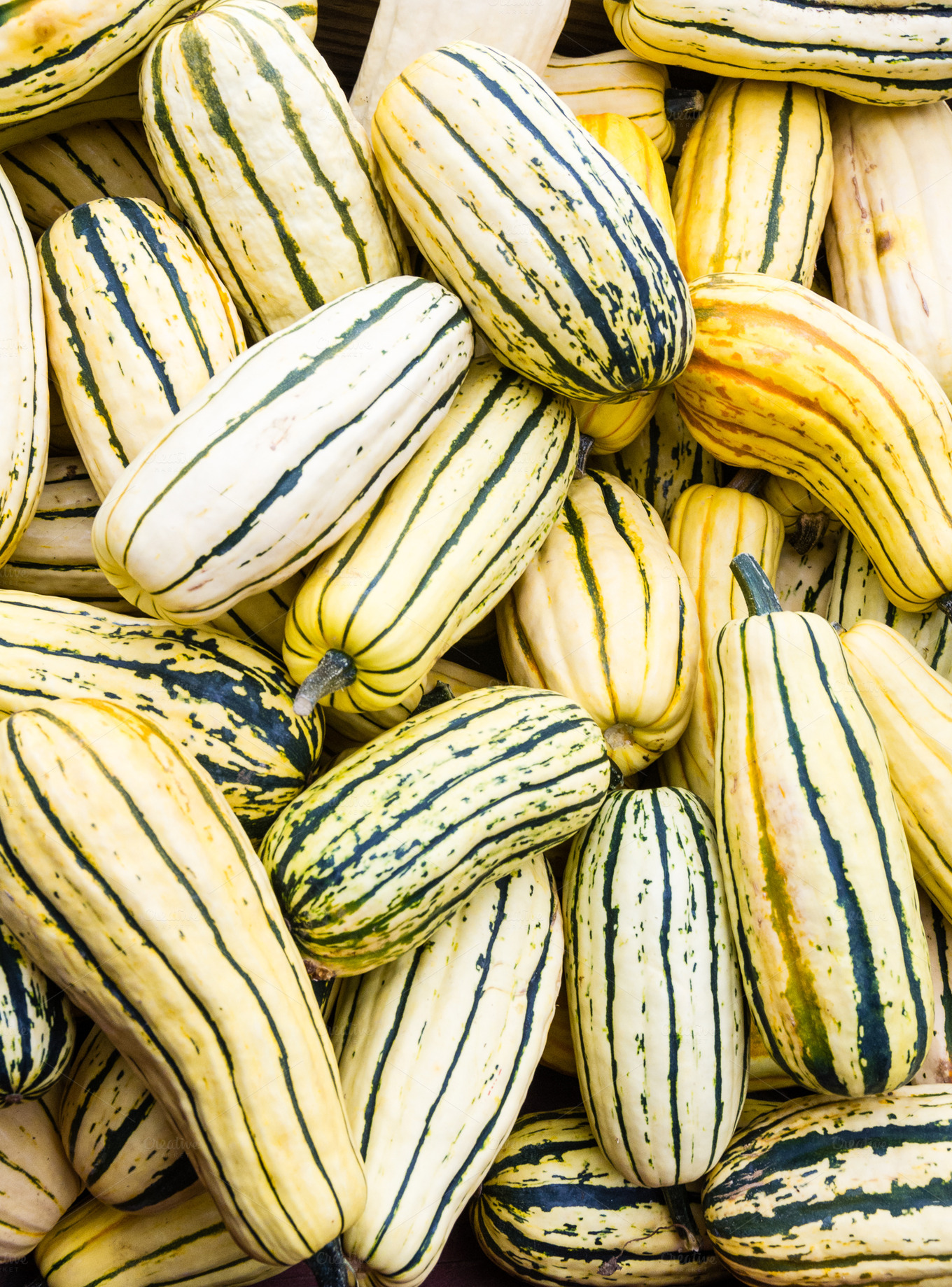 Delicata squash on display ~ Food & Drink Photos on Creative Market