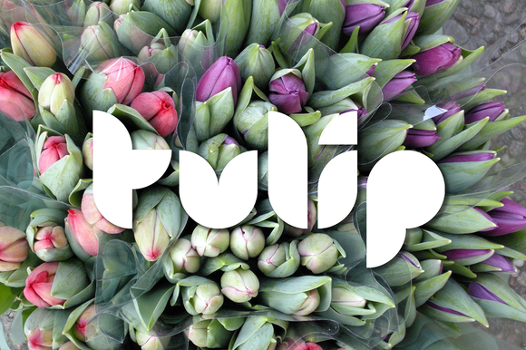 Tulip Font