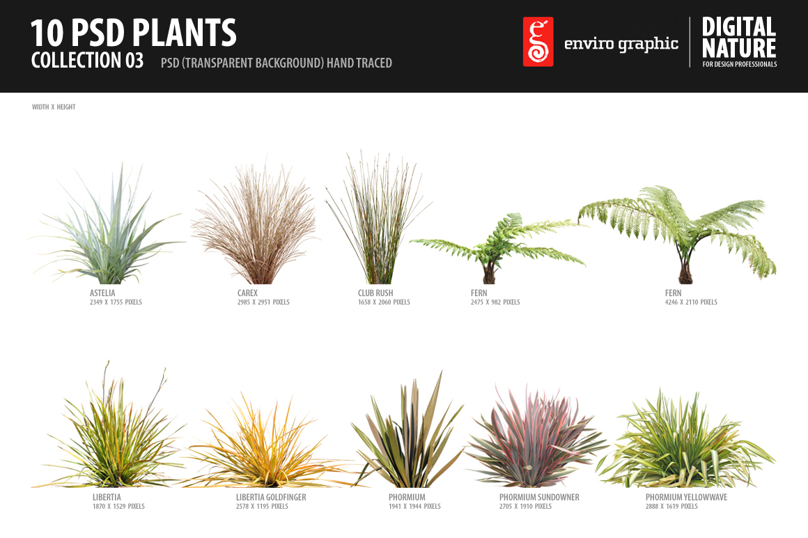 10 Psd Plants Collection 3 Objects On Creative Market