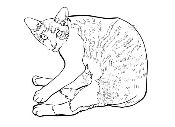 Laying down cat.vector illustration - Illustrations