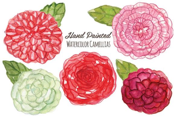 Camellia Flower Painting Watercolor Flowers Camellias