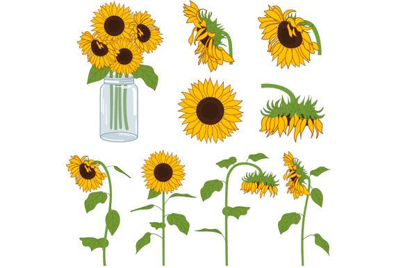 Sunflowers Set Illustrations On Creative Market