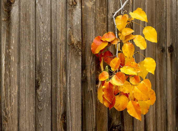 Leaves Changing Colors On Wood Pictures To Pin On