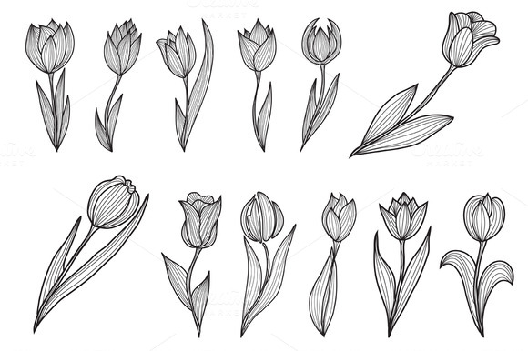Decorative Tulips Set